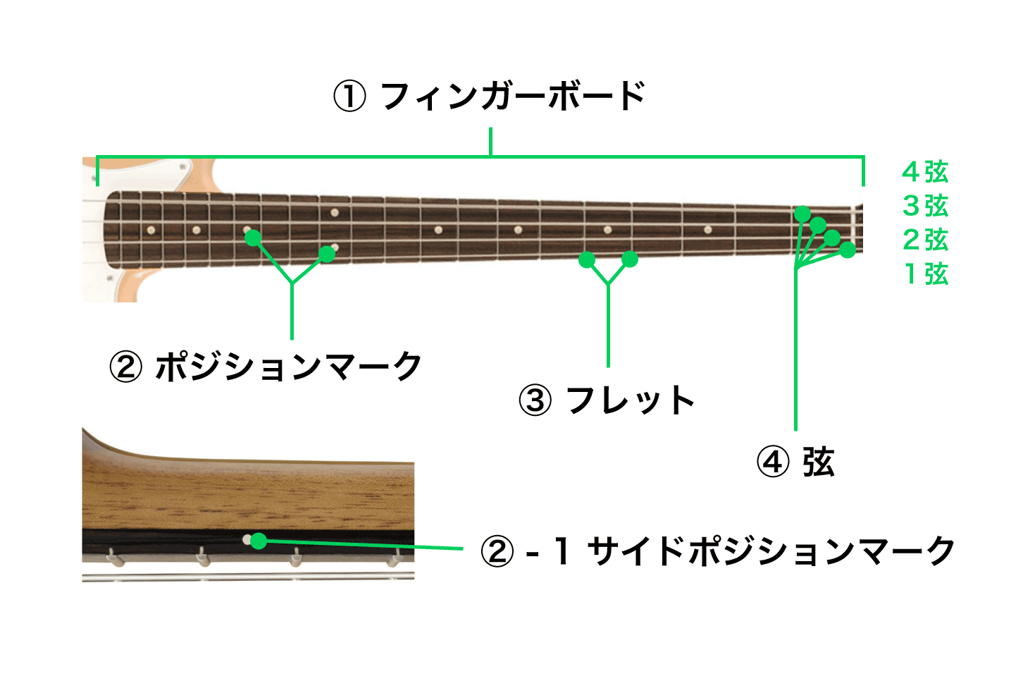 ネック フィンガーボード、ポジションマーク、サイドポジションマーク、フレット、弦